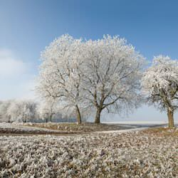 Frost covering trees and a grassy field in Hinckley
