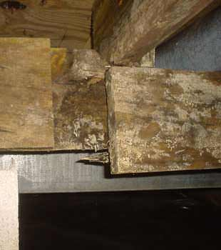 Extensive basement rot found in Bemidji by Northern States Basement Systems