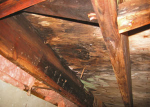 Extensive crawl space rot damage growing in Grantsburg