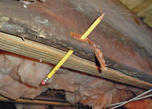 Destroyed crawl space structural wood in Ely