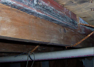 Rotting, decaying wood from mold damage in Deer River
